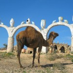 An Urban Camel - Doesn't Know he is on the Menu