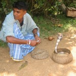 A Roadside Snake Charmer Performs for Tourists