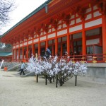 Fortune Trees at the Kyoto Temple