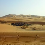 A Tented Camp in the Sahara