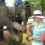 Feeding the Elephants at Pattaya