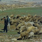 Berber Shepherds in the Middle Atlas Mountains