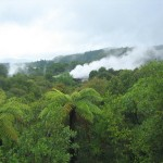 Thermal Vents in the Rain Forest