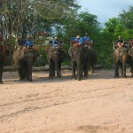 The Elephants and their Mahouts