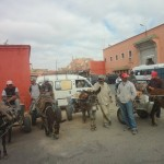 Donkeys and Drivers for Hire in the Medina