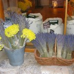 Lavender for Sale in a Local Shop