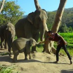 A Mahout with the Moms and Babies